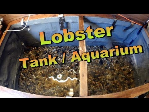 Cleaning Out Lobster Tank / Aquarium ( How it Works )