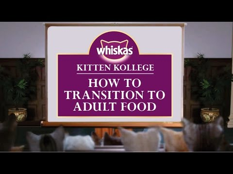 Weaning Kittens - How To Transition Kittens To Adult Cat Food : Kitten Kollege