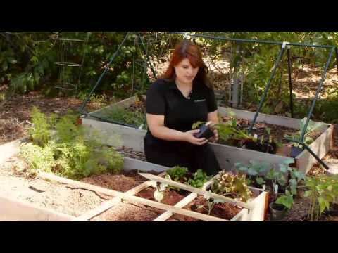 Vegetable Varieties for Square Foot Gardens
