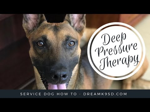 Service Dog Task Training - Deep Pressure Therapy - DreamK9.com