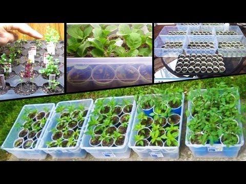 Starting Vegetable Seeds Tomato How to plant from seed grow square foot garden planting