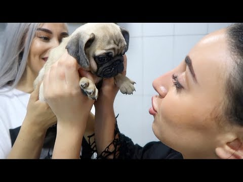 SURPRISING MY SISTER WITH A NEW PUPPY!!
