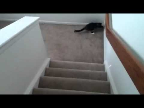 Keeping Kittens Entertained in a Tiny Apartment