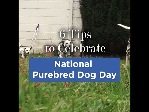6 Tips to Celebrate National Purebred Dog Day - May 1st