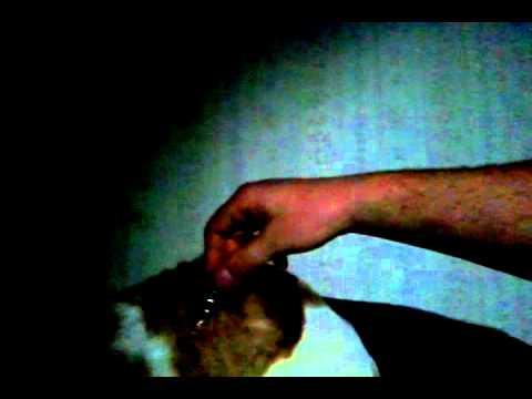 Light bulb lights off of cat static charge