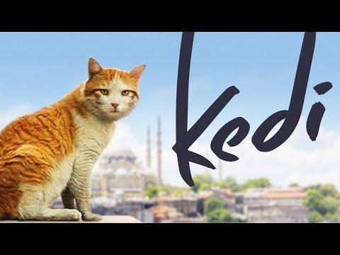 Kedi - Full Length Documentary