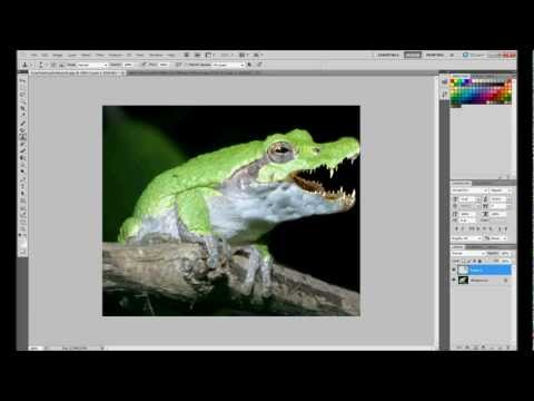 How To Combine Images [Frog and Crocodile] Photoshop cs5 [HD]