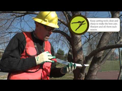 How to Prune: Large Branch Pruning