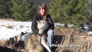 Misrepresentation of Wolfdogs