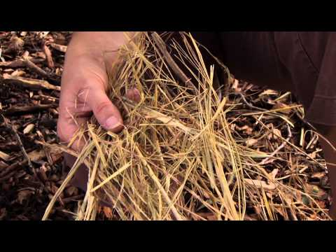 Soil Organic Matter and Nutrition