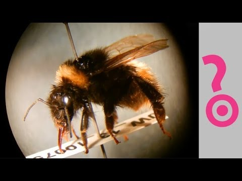 Can We Survive Without Bees? - Do You Know?