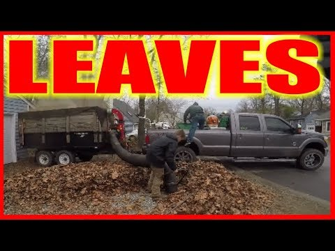 Back in These Street - Episode 13 #LawnCare