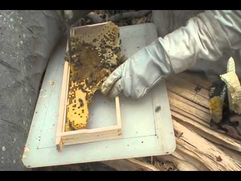 A Bee Tree: Removing Bees from a Tree