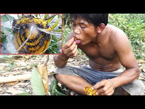 Primitive Technology, Harvesting Honey Bee