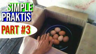 🔴Alat Tetas Telur SederHana Dari Kardus #1