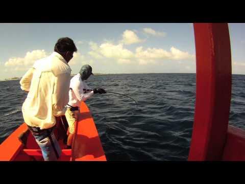 Christmas Island (Kiritimati) GT (ulua) Popping