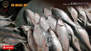 আশ্চর্যজনক চাঁদপুরের পদ্মা নদির  ইলিশ মাছ ৷ অনেক দাম ৷ CHANDPUR  PADMA ILISH |