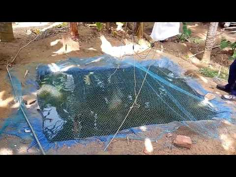 Low cost fish pond
