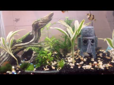 How to clean a Planted Freshwater aquarium for clear water