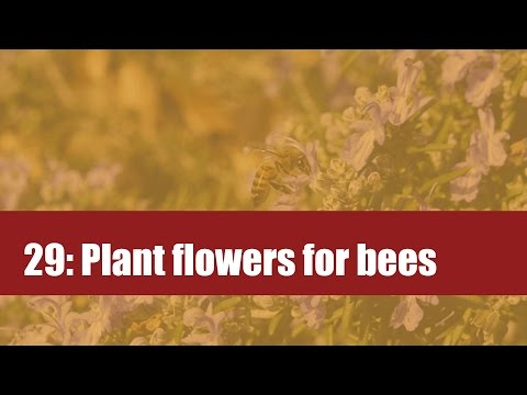 29: Plant flowers for pollinators: Attract bees to your garden by planting flowers