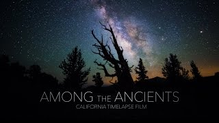 Among the Ancients - California Timelapse 4K