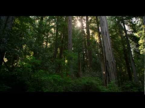 REDWOOD NATIONAL PARK IN 4K (Ultra HD)