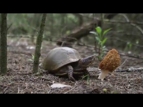 Hunt Morel Mushrooms In Oklahoma