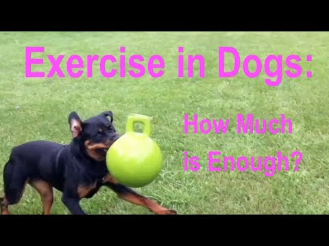 Exercise in Dogs: How Much is Enough?