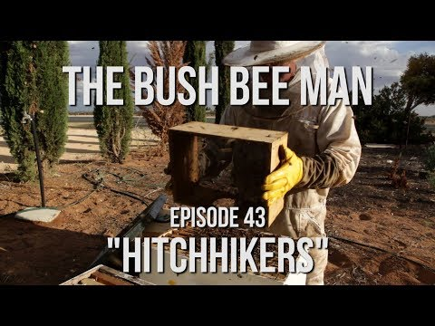 Transferring Bees from Bee Vacuum into a New Hive - Episode 43: