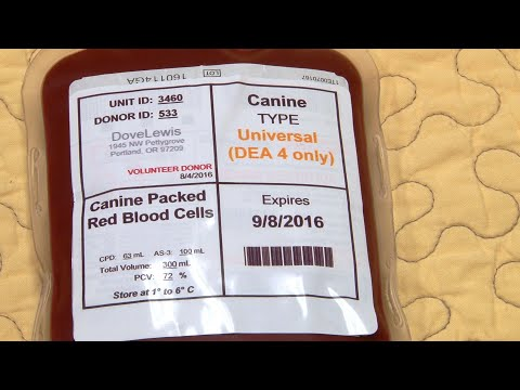 Blood Products Breakdown