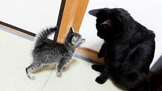 子猫とクロの初対面は予想外の出来事ばかりでした