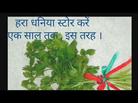 How to Keep Coriander Leaves Fresh for Long in Fridge / How to Store Dhaniya Leaves   for One Year