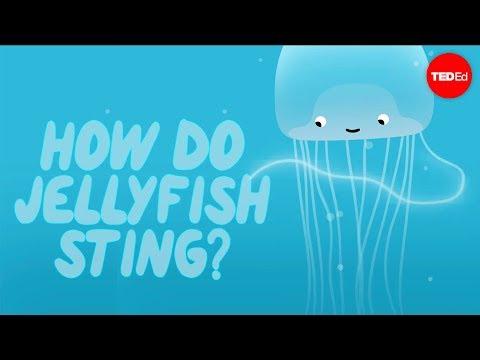 How does a jellyfish sting? - Neosha S Kashef