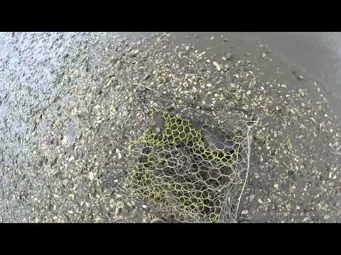 Easiest Way To Catch A Flounder In The Lowcountry Beaufort Sc