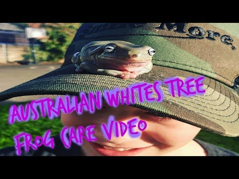 Australian Whites Tree Frog Care Video