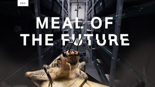 Why companies are mass-producing edible insects