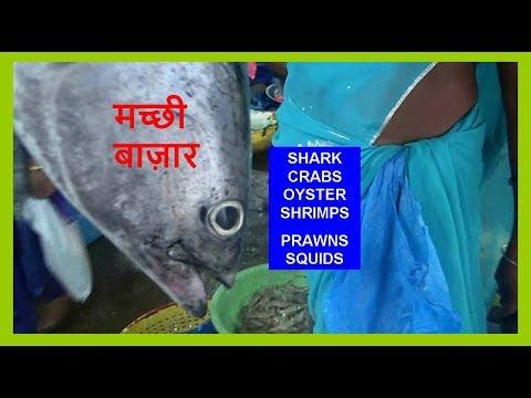Indian Fish( मछली ) Market In Mangalore ( With price ) Enjoy Sea Food Of Karnataka