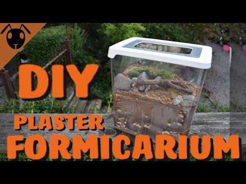 How to make a Plaster FORMICARIUM! *Tutorial*
