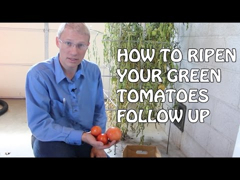 How To Ripen Your Green Tomatoes Follow Up
