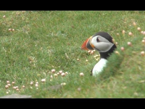 Shetland bird paradise