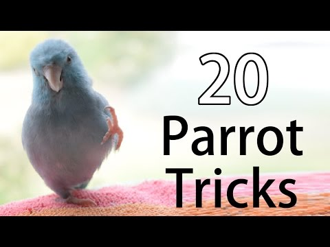 20 Fun Parrot Tricks