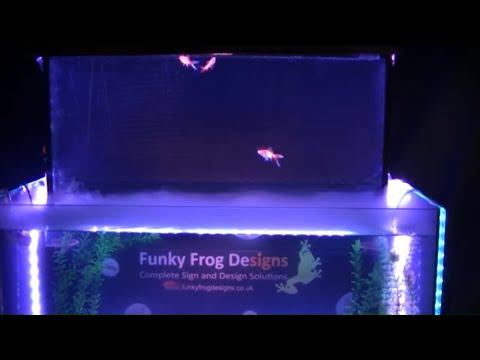 Inverted aquarium / upside down fish tank !!!