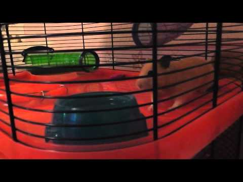 How To Keep Hamsters Warm In Winter (Request)