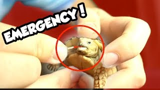 I SAVED MY BABY TORTOISES LIFE! He Would Have Died!