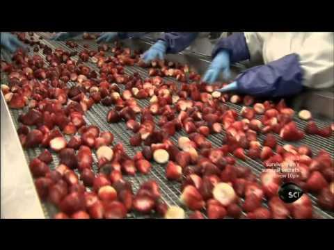 How It's Made - Frozen Fruit