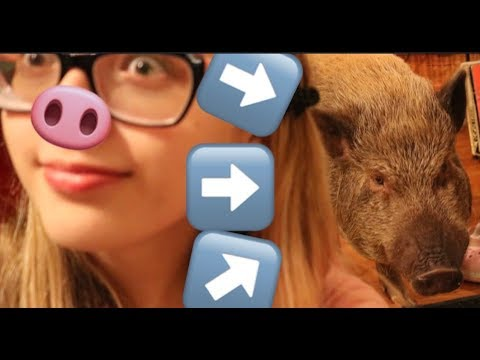 Meet this ADORABLE Pig