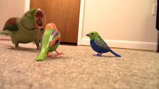 Real Bird