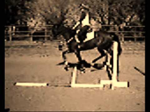 My Horse Bindie R.I.P
