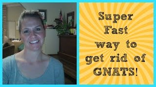 Super Fast Way To Get Rid Of Gnats