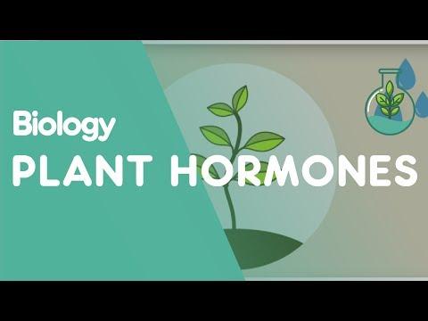 Plant Hormones: Tropisms | Biology for All | FuseSchool